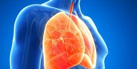 Lunge und Pneumologie (Lungenheilkunde)
