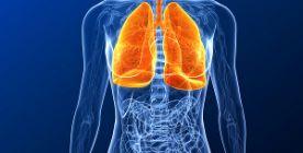 Die Lunge - Anatomie, Funktionen und Erkrankungen