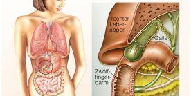 Die Gallenblase - Anatomie, Funktionen und häufige Erkrankungen