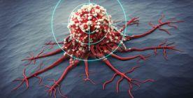 Das Immunsystem - Funktionsweise und Erkrankungen