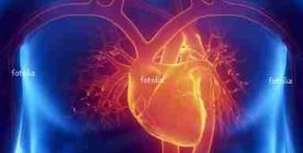 Das Herz - Anatomie, Funktion und häufige Erkrankungen